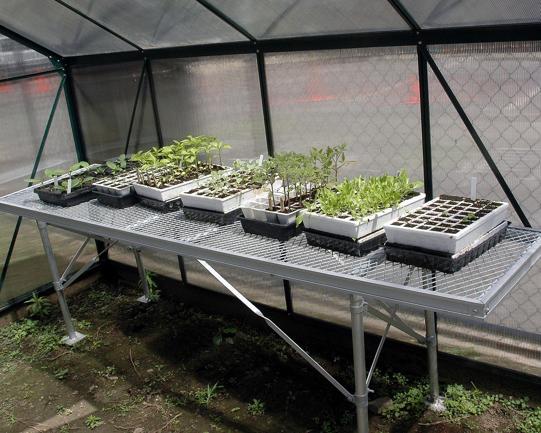 Seedlings growing in the greenhouse