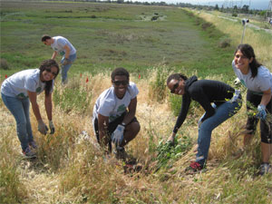 Stanford Law students help remove invasive weeds from the baylands