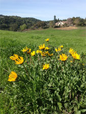 Mule's Ear with Westwind Community Barn in the background