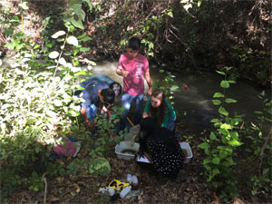 Testing water quality on Stevens Creek