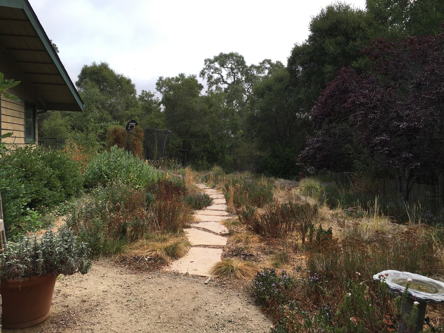 Native Gardening Tips For Fall Grassroots Ecology