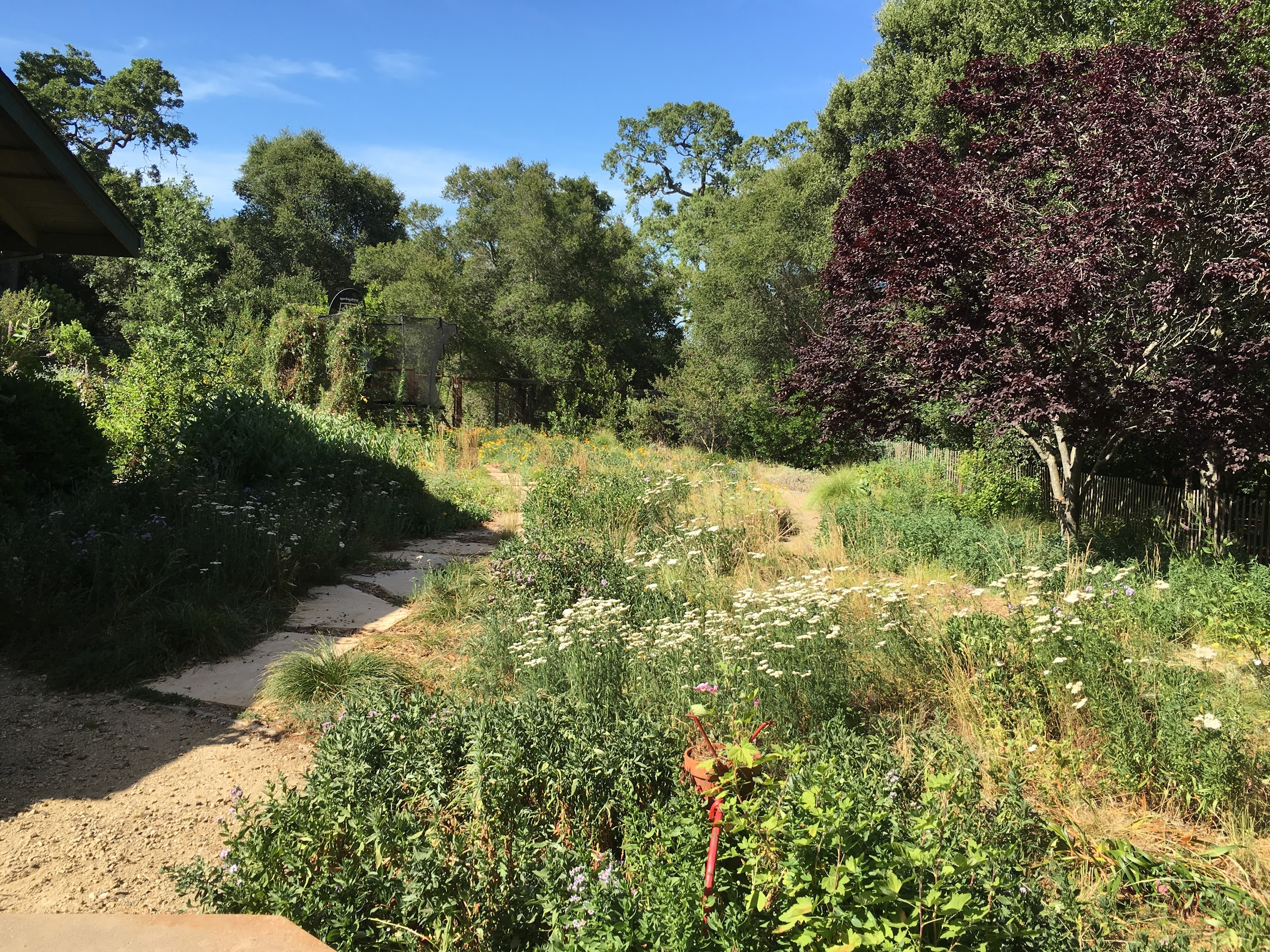 Native plant meadow in June