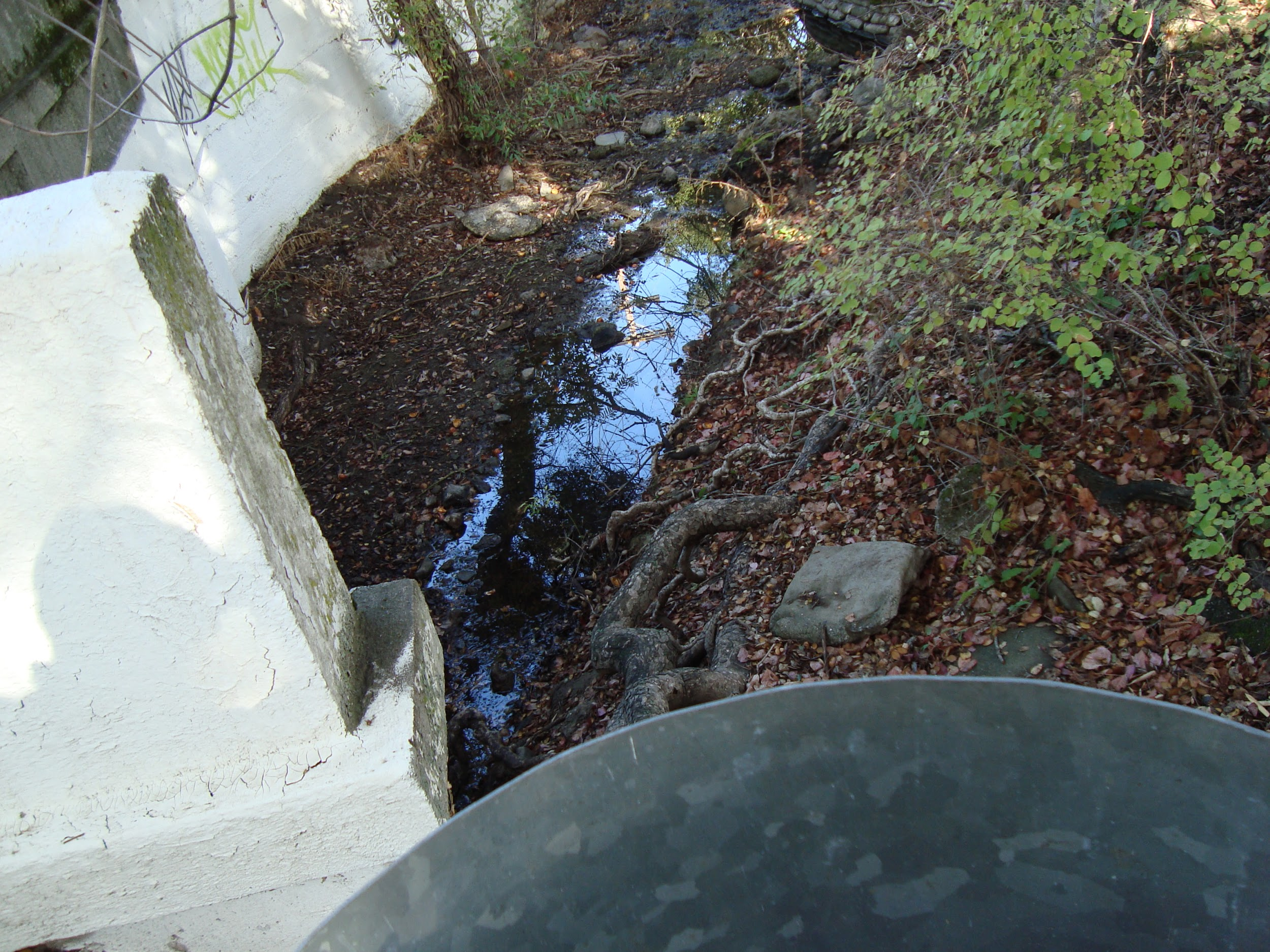 Water runs clear at Matadero Creek at Old Page Mill Road, November of 2014 where a small oil leak was discovered during the winter of 2013-2014. Photo Credit: Bob Foglesong.