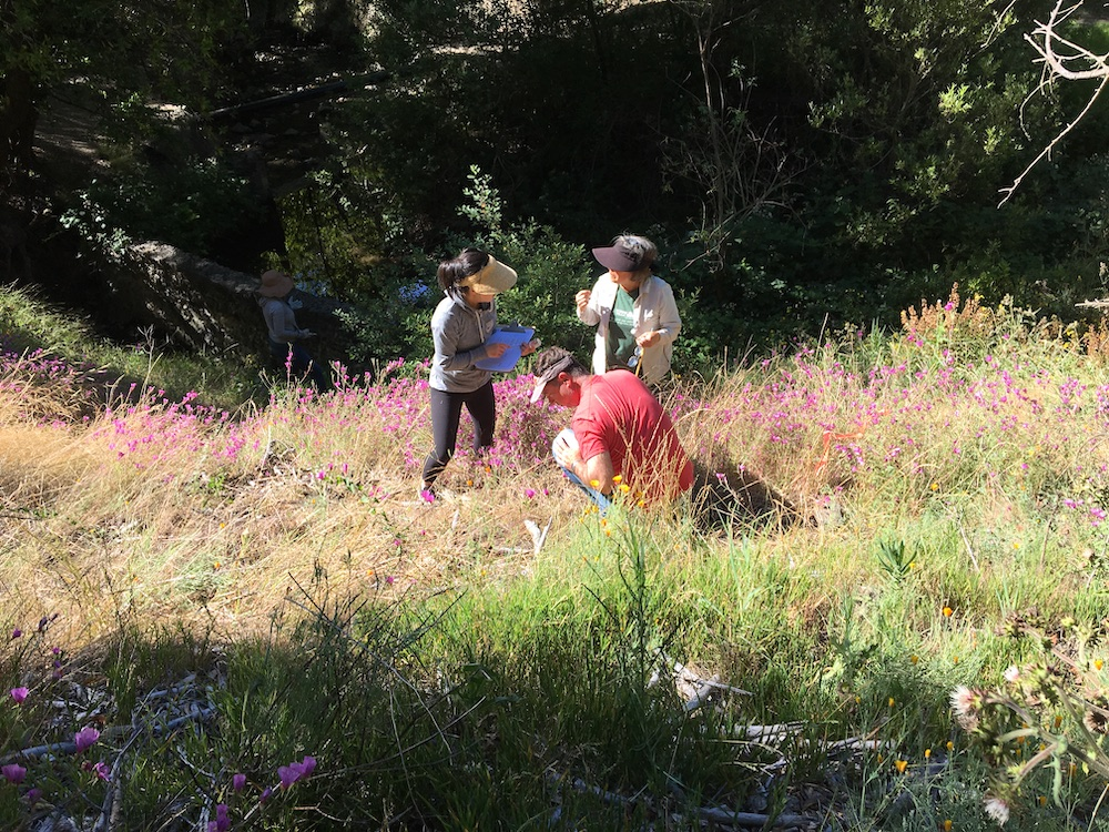 Volunteers and our Senior Ecologist Claire at the ant survey