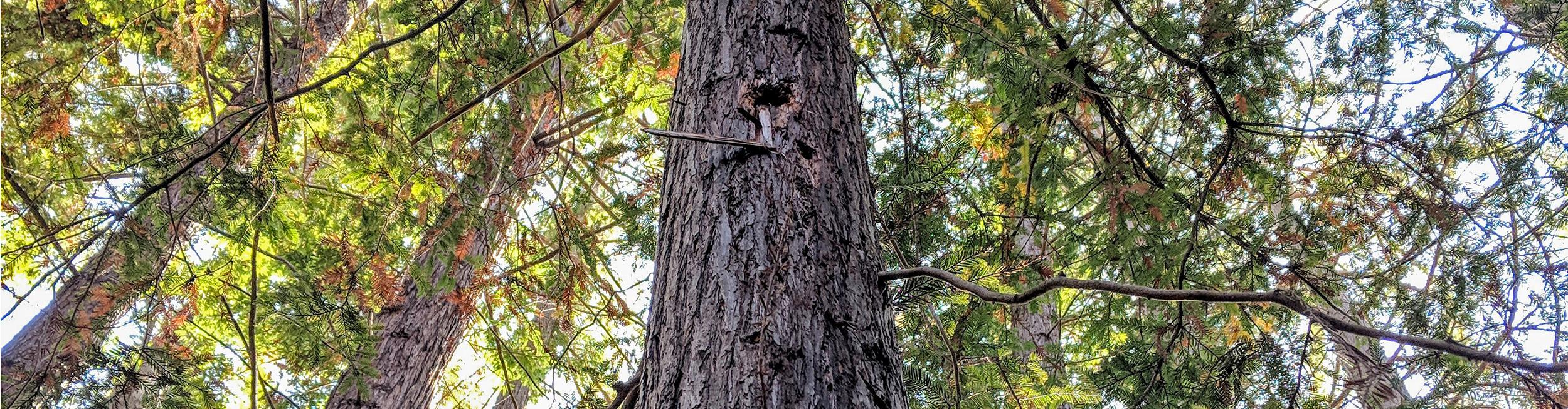 Redwood Grove cover photo.jpg
