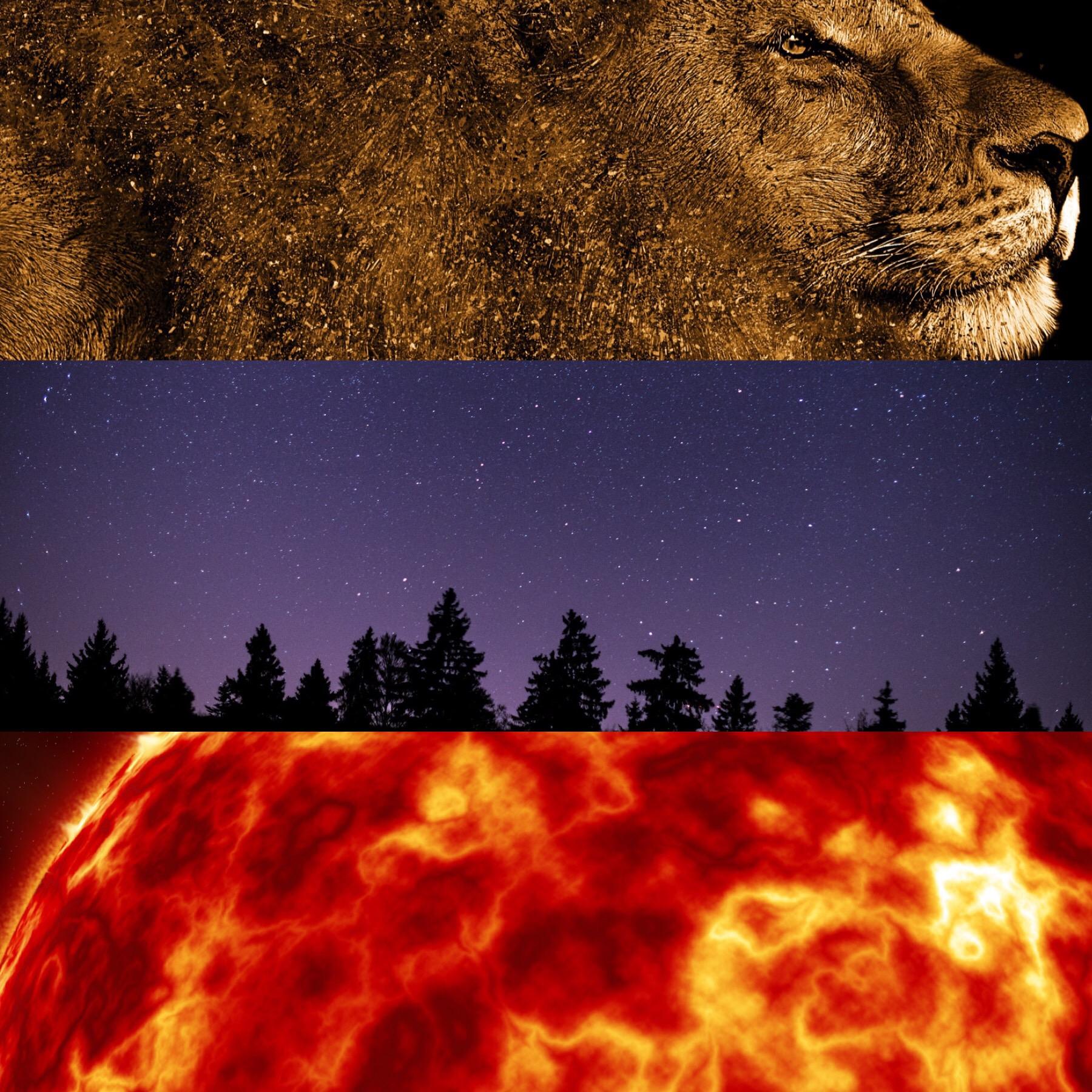 Leo's Lucky Colors - Gold, Royal Purple, Orange