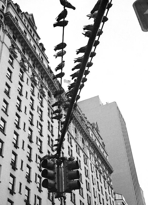 Rudy Gutierrez  -  Pigeons, Central Park, NY  - Art Masters Sponsor Award - Merchandise