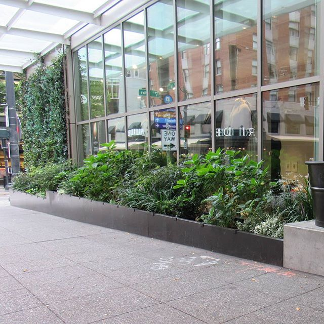 Streetscape planters we installed a few years ago at Club Monaco in Seattle.  It's nice to see the plants maturing.  Design by @boardandvellum  #steelplanters #streetscape #landscapearchitecture