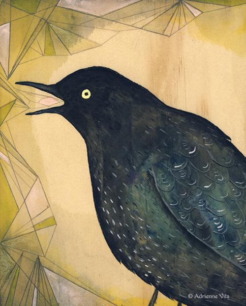 adriennevita_blackbird_illus.jpg