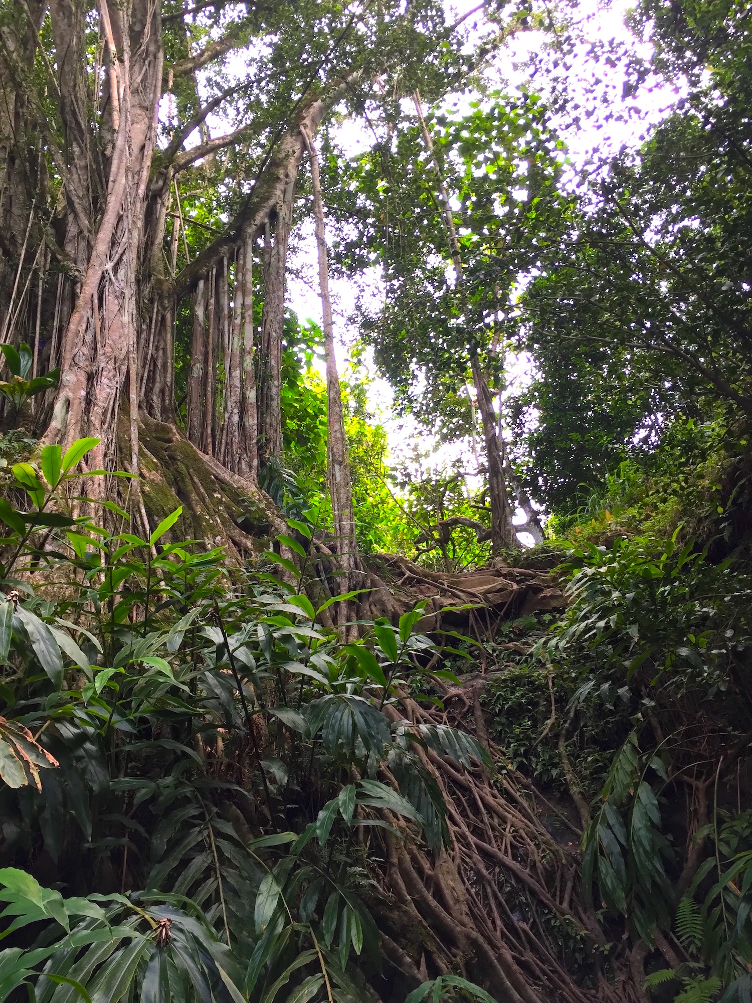 private-guided-hikes-west-maui-hawaii.jpg