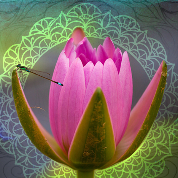 Lotus flower with dragonfly.