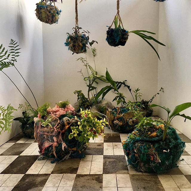 Living sculptures. Propagated plants and plastic refuse salvaged from the shores of Borabocay