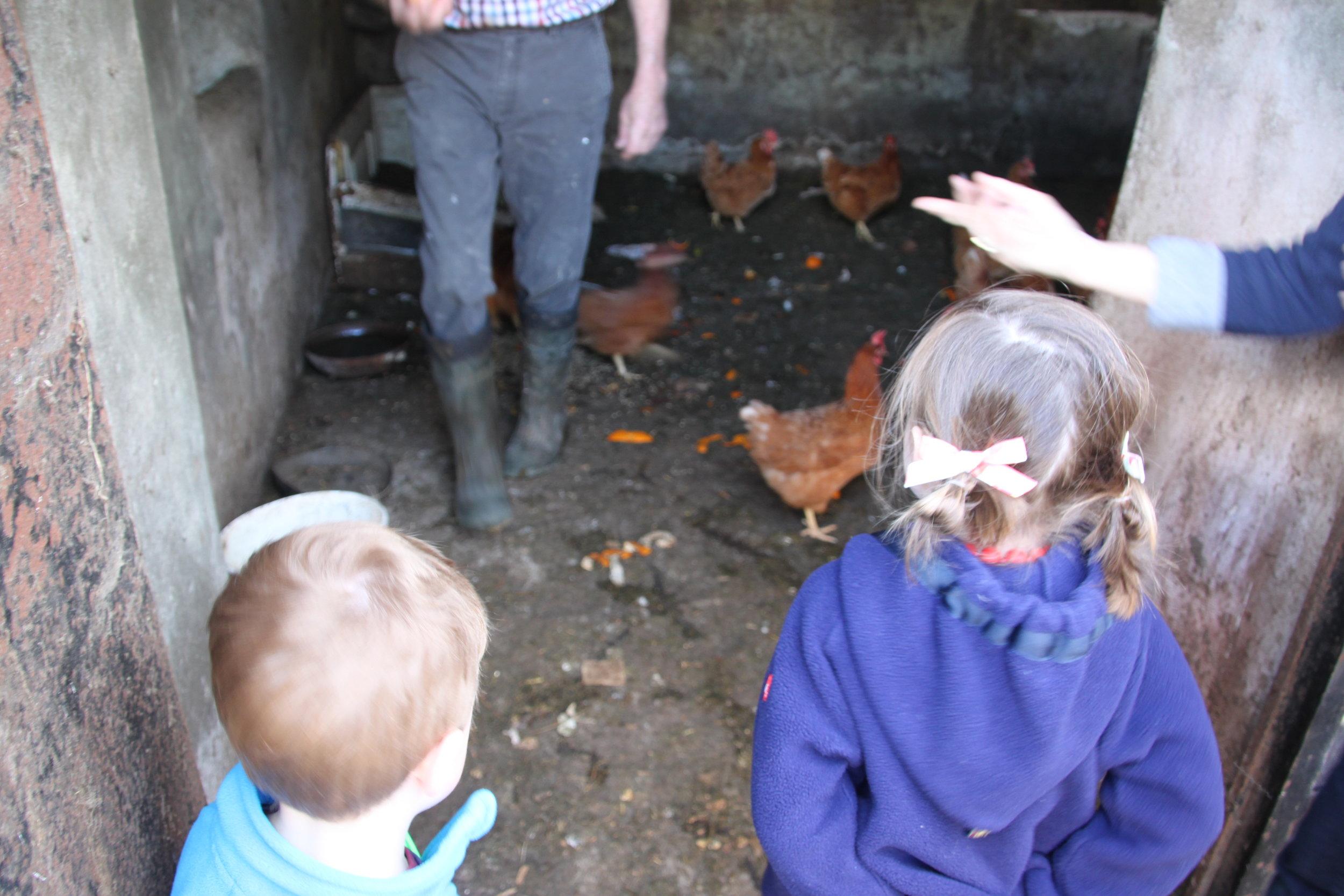 feeding-chickens-at-a-farm-in-ireland.jpg