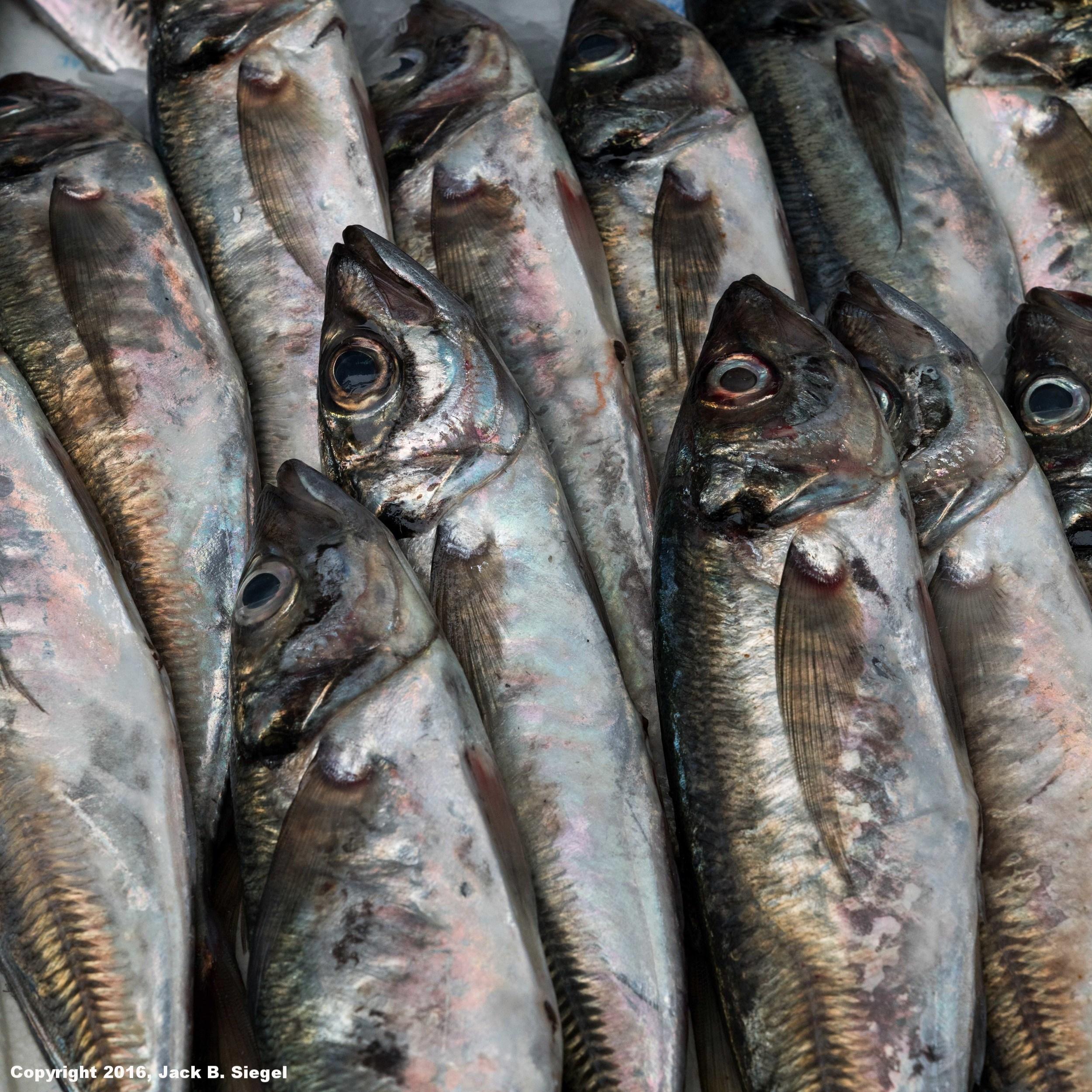 DSC03966_sRGB_CO_Relative_Fresh Fish in the Market.jpg
