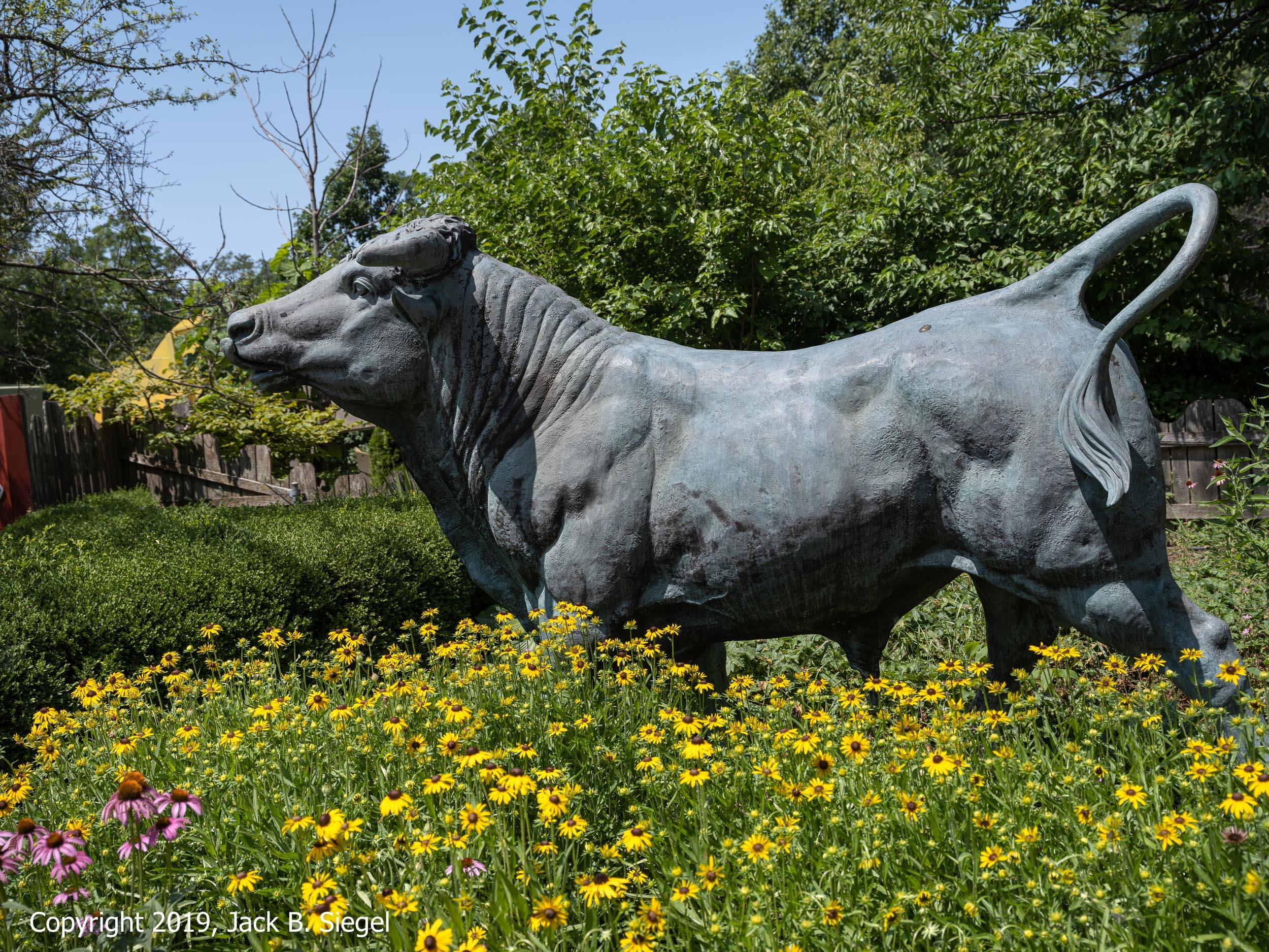 _DSF4965_Copyright 2018 jpeg_Ferdinand the Bull.jpg