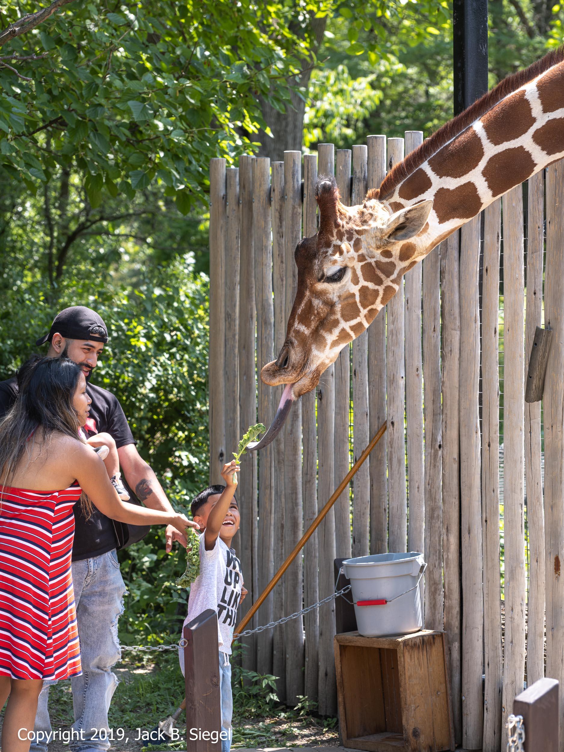 _DSF4639_Copyright 2018 jpeg_Kale for a Giraffe.jpg