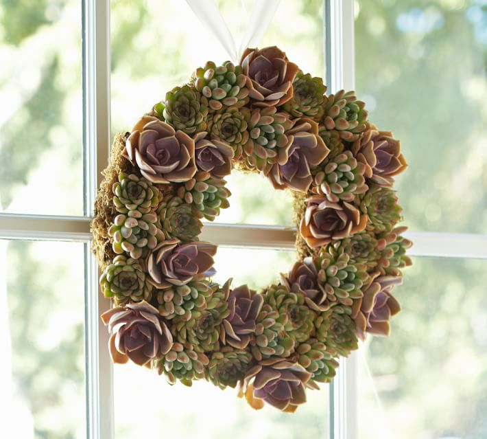 live succulent wreath