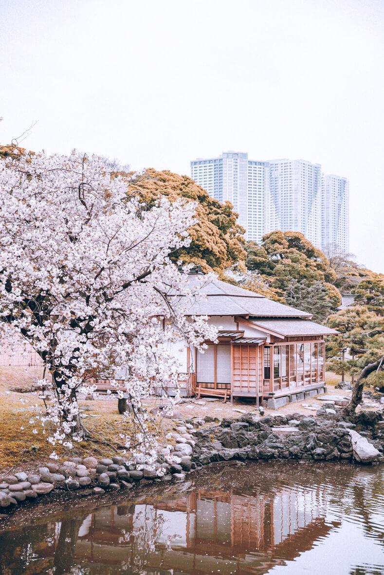 Japan-239.jpg
