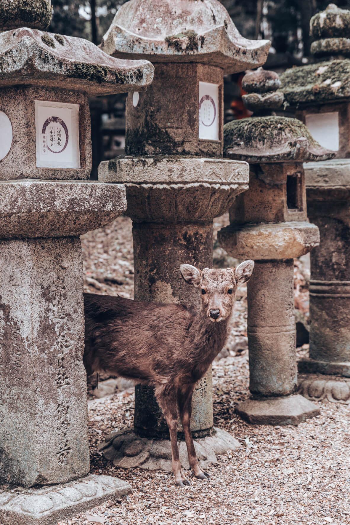 Japan-396.jpg