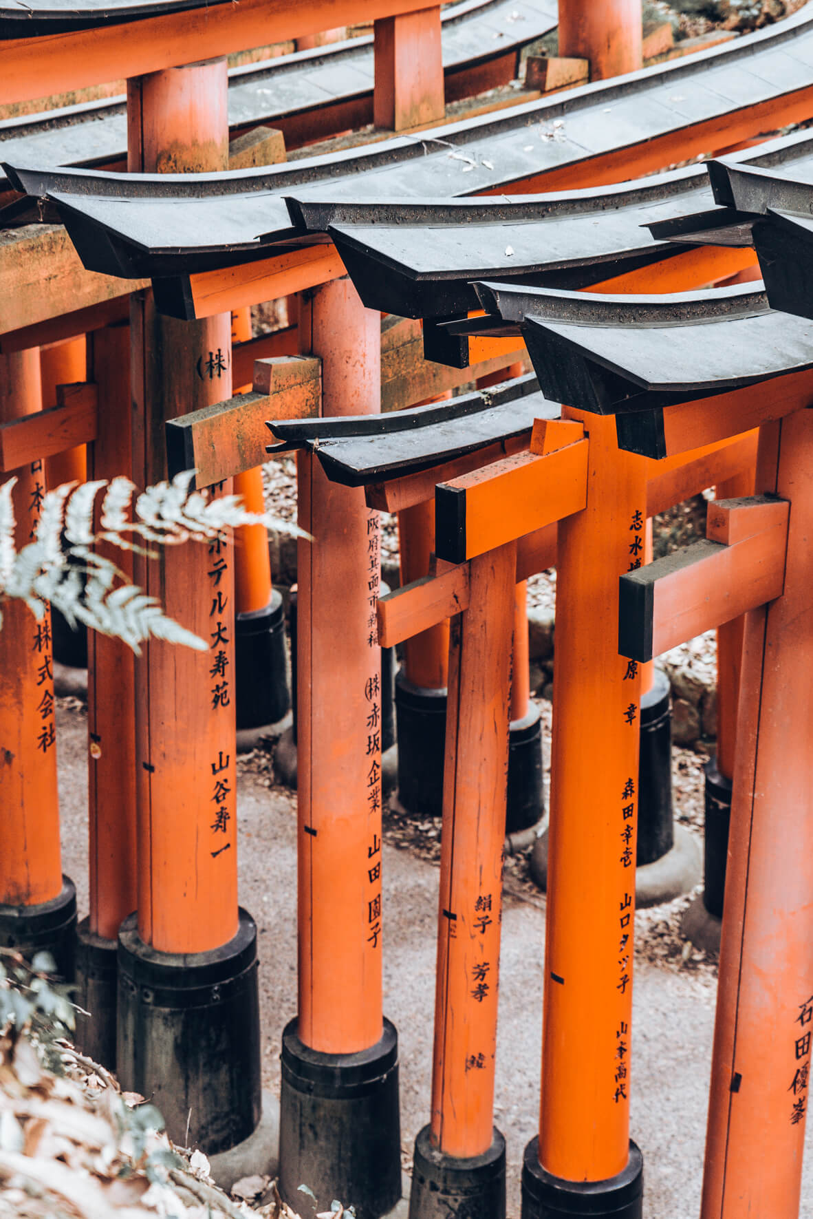 Japan-419.jpg