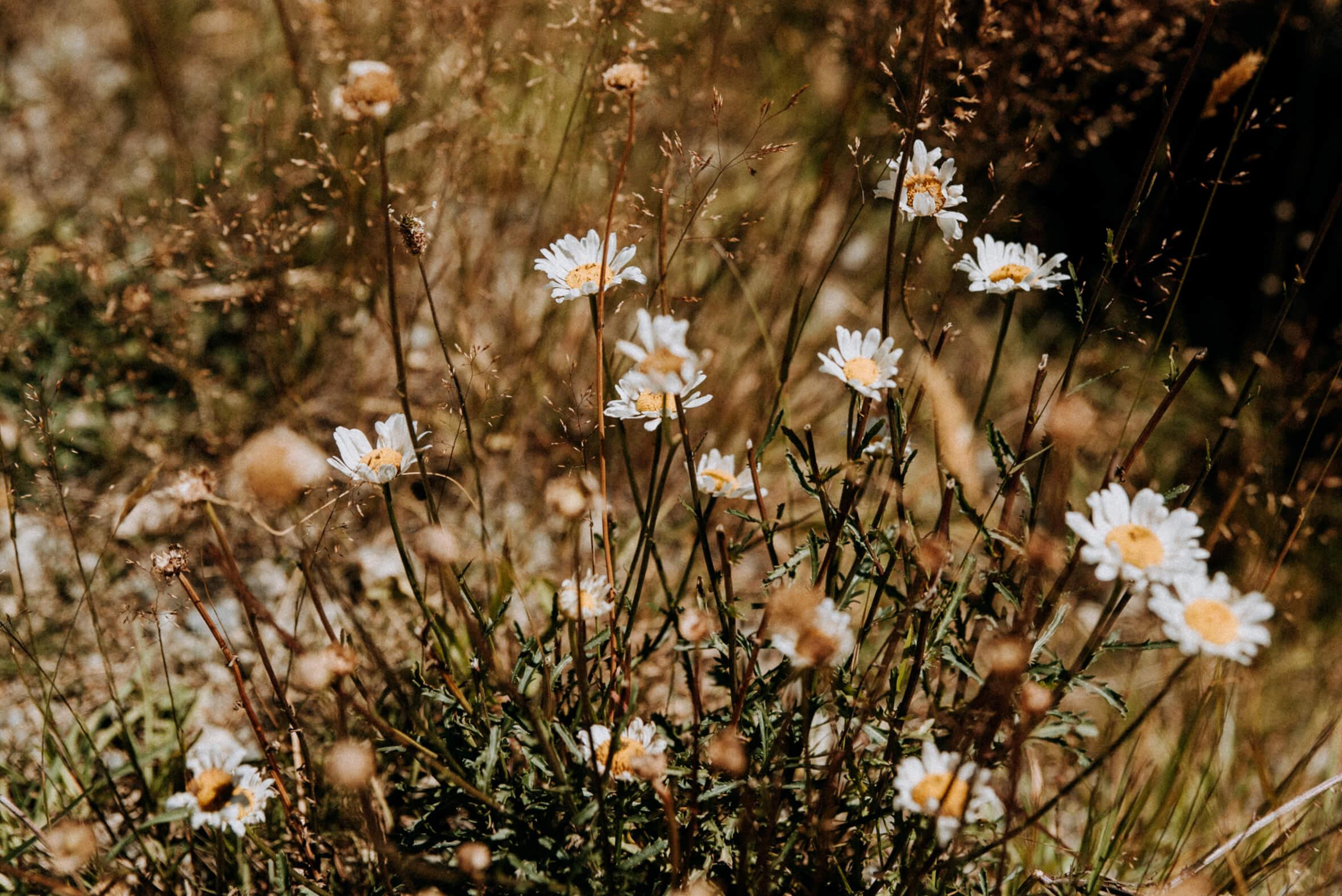 Wild Flowers NZ