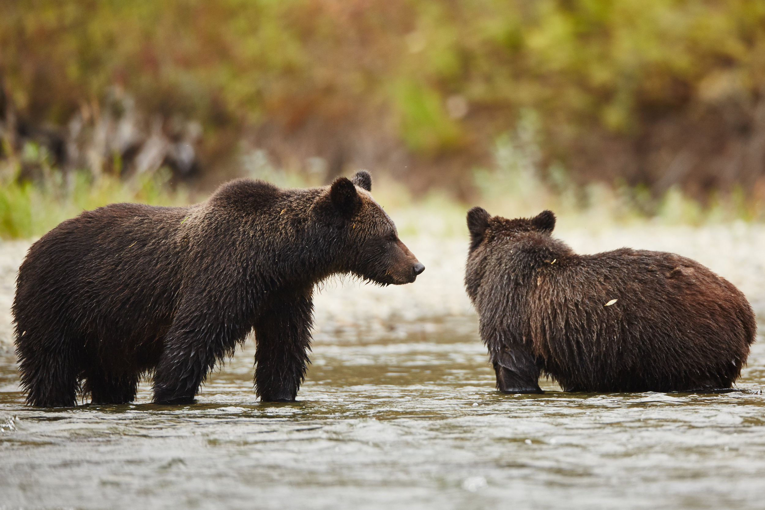 bear13 (2).jpg