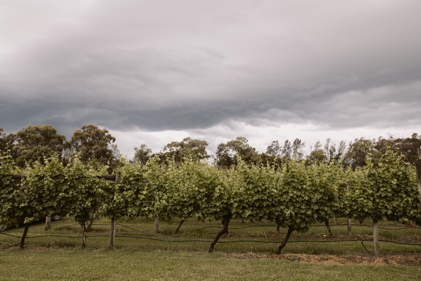 Immerse Yarra Valley Winery Wedding Photography106.jpg