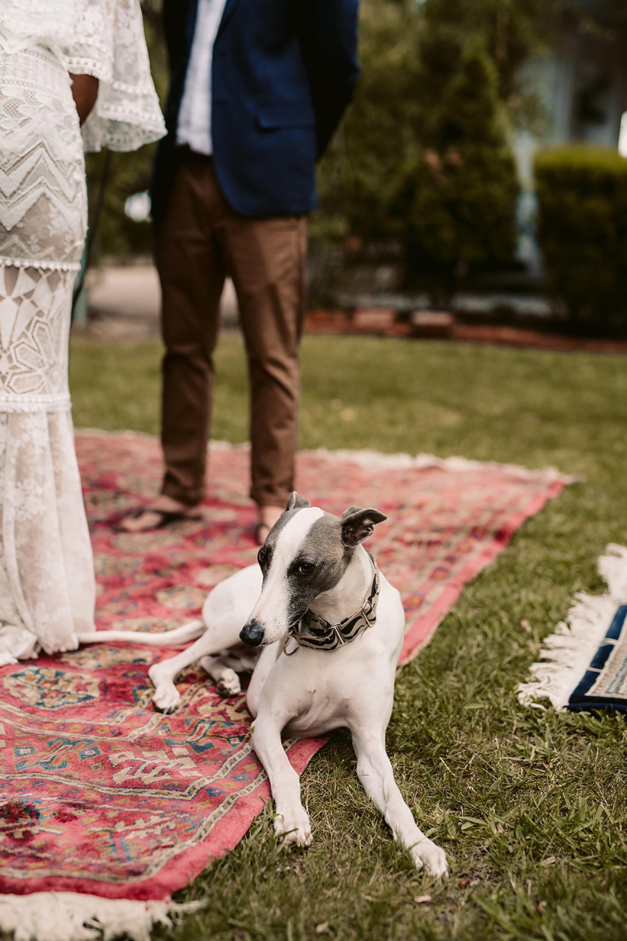 Wedstival Festival Wedding Photographer Yarra Valley74.jpg