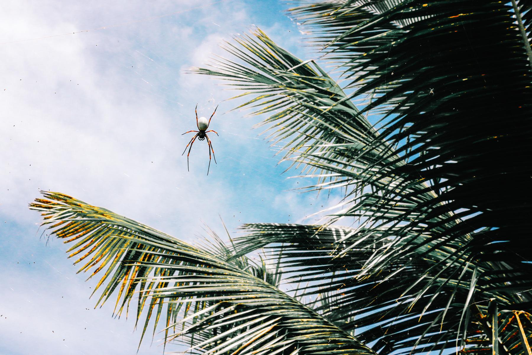 LAB Fiji-7.jpg