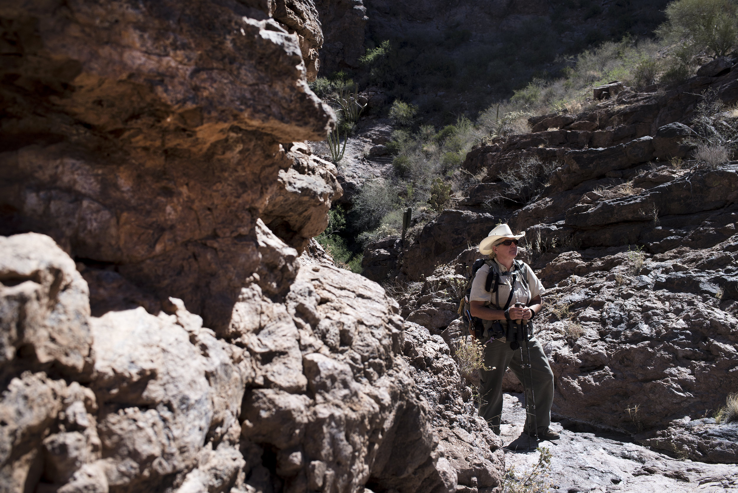 Independent wildlife biologist Rosemary Schiano surveys an area of southern Arizona's Organ Pipe Cactus National Monument, along the US-Mexico border. June 2017.