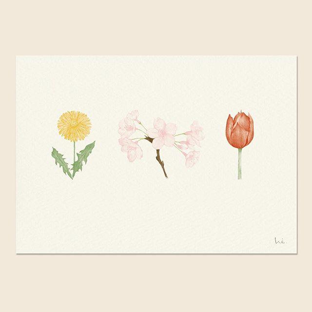 春のお花 spring flowers  this pigment ink print is available at my shop   @hiyokoimai  #pencildrawing #pencilillustration #dandelion #tulip #sakura #springflowers #walldecor #kidsroomdecor