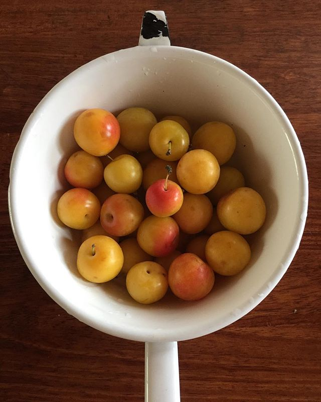 Check out these cute lil' yellow plums we picked up from @schollorchards at the EFM! 😍