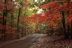 fall 2.jpg