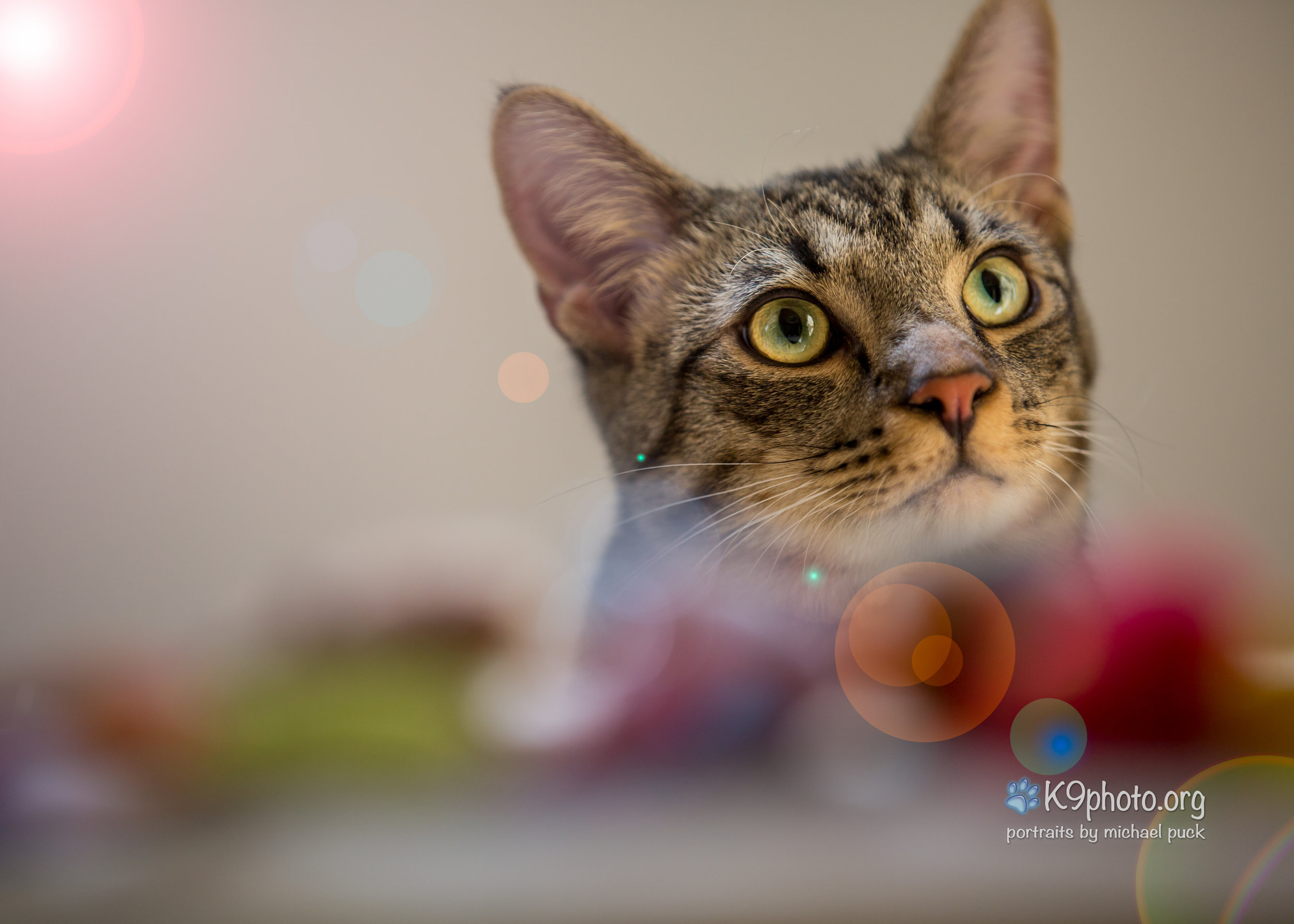 Yodi, decided to hide behind a wall-size cabinet for the first 30 min of the photo shoot