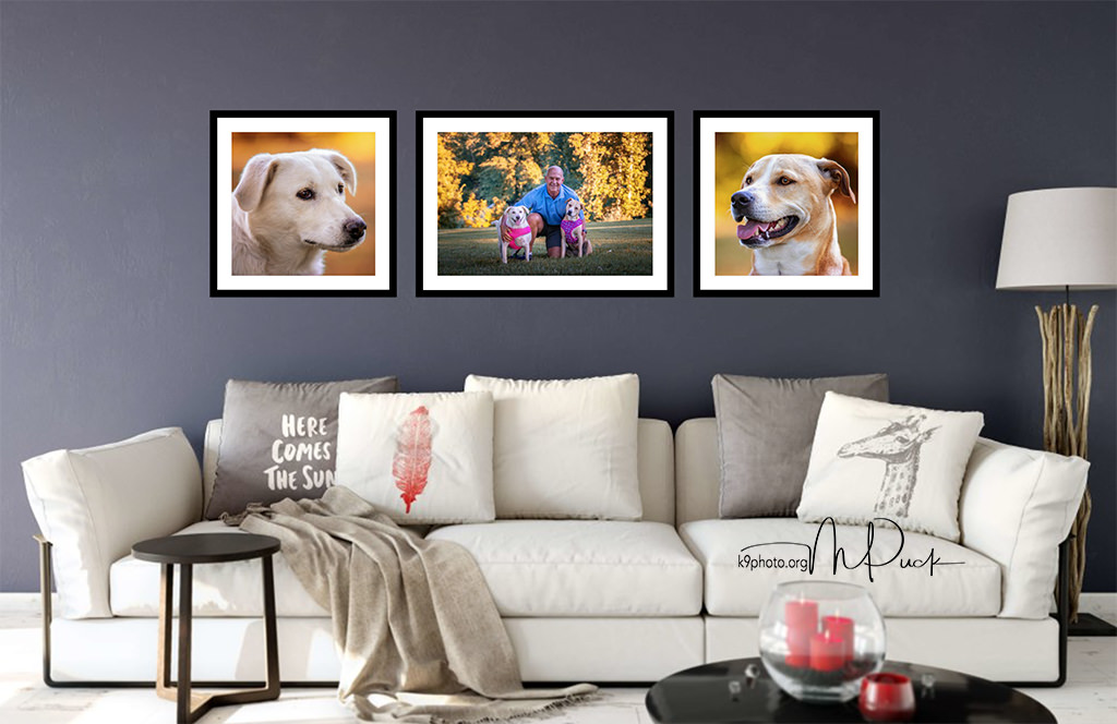 Every time you look at pictures of your dog your brain releases feel good chemicals. Place a picture of your dog in your office and enjoy better moods and higher levels of productivity.
