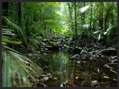 Daintree Rainforest Cairns Australia