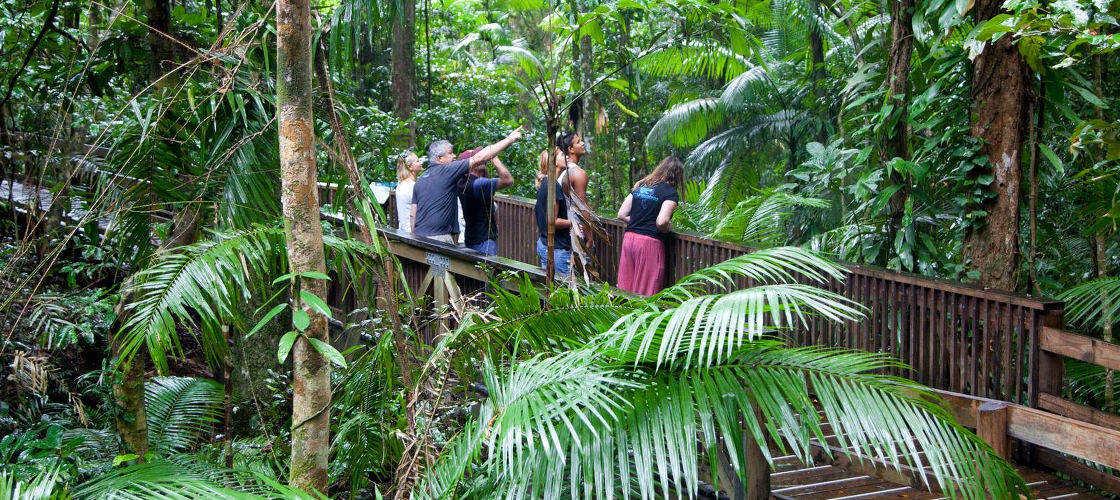 Luxury Daintree Rainforest Tour