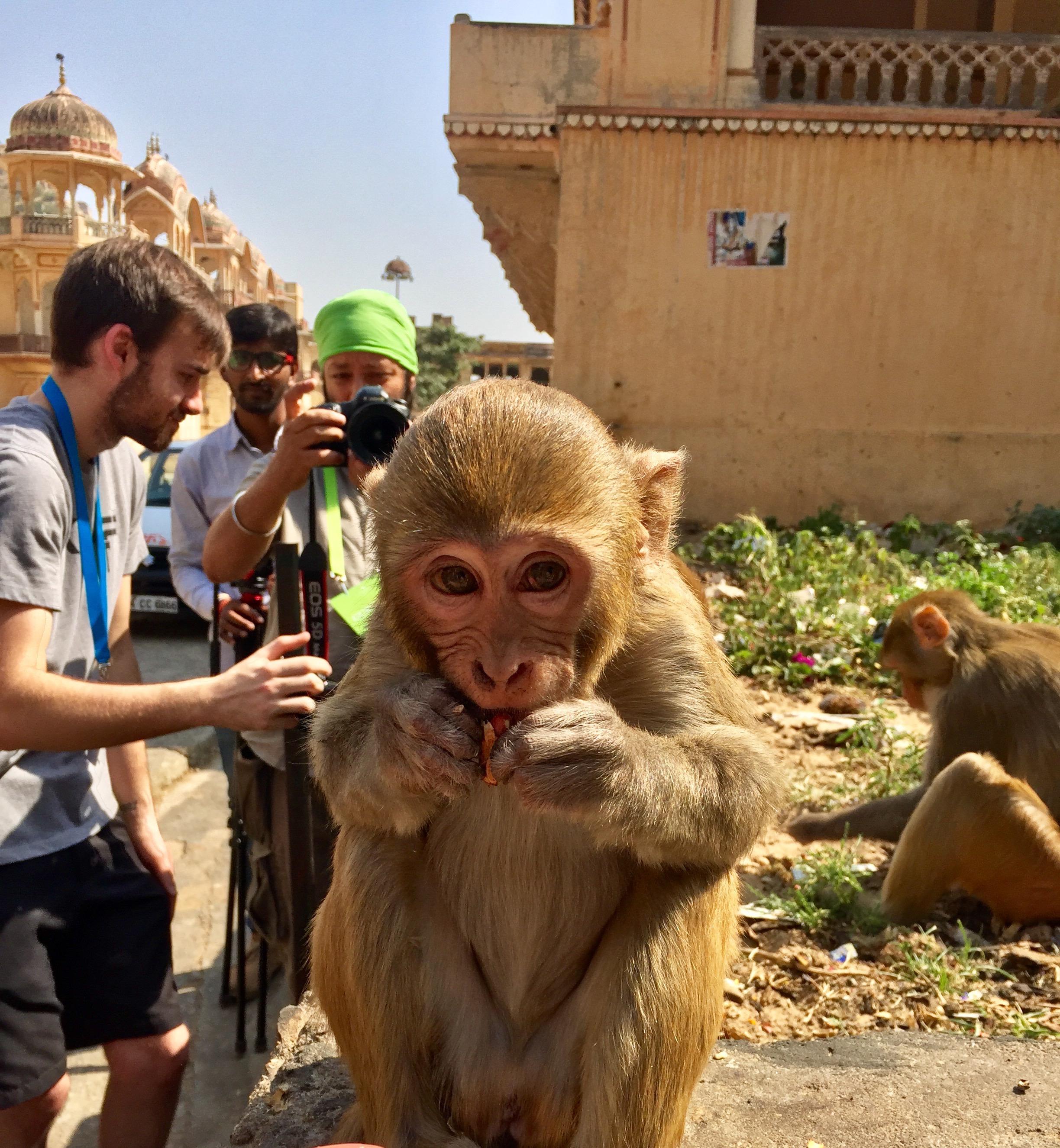 Galta Ji Jaipur - Monkey Temple