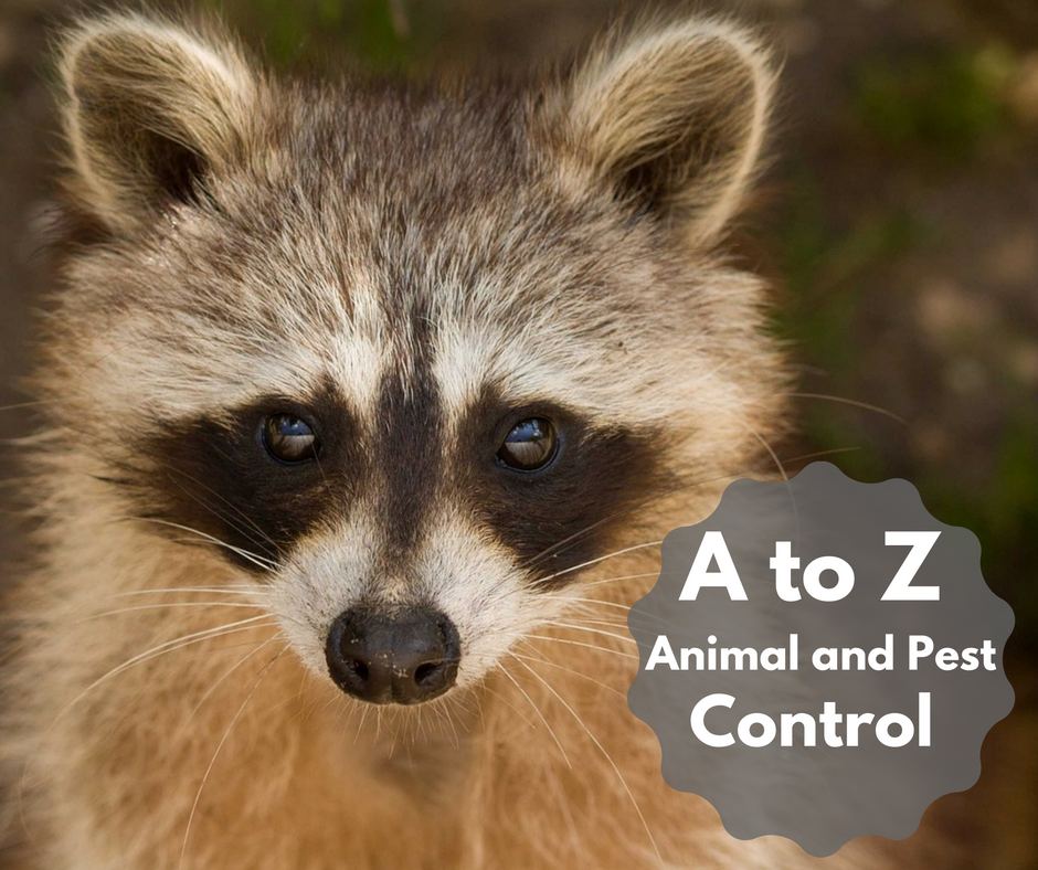 a to z animal and pest control.png