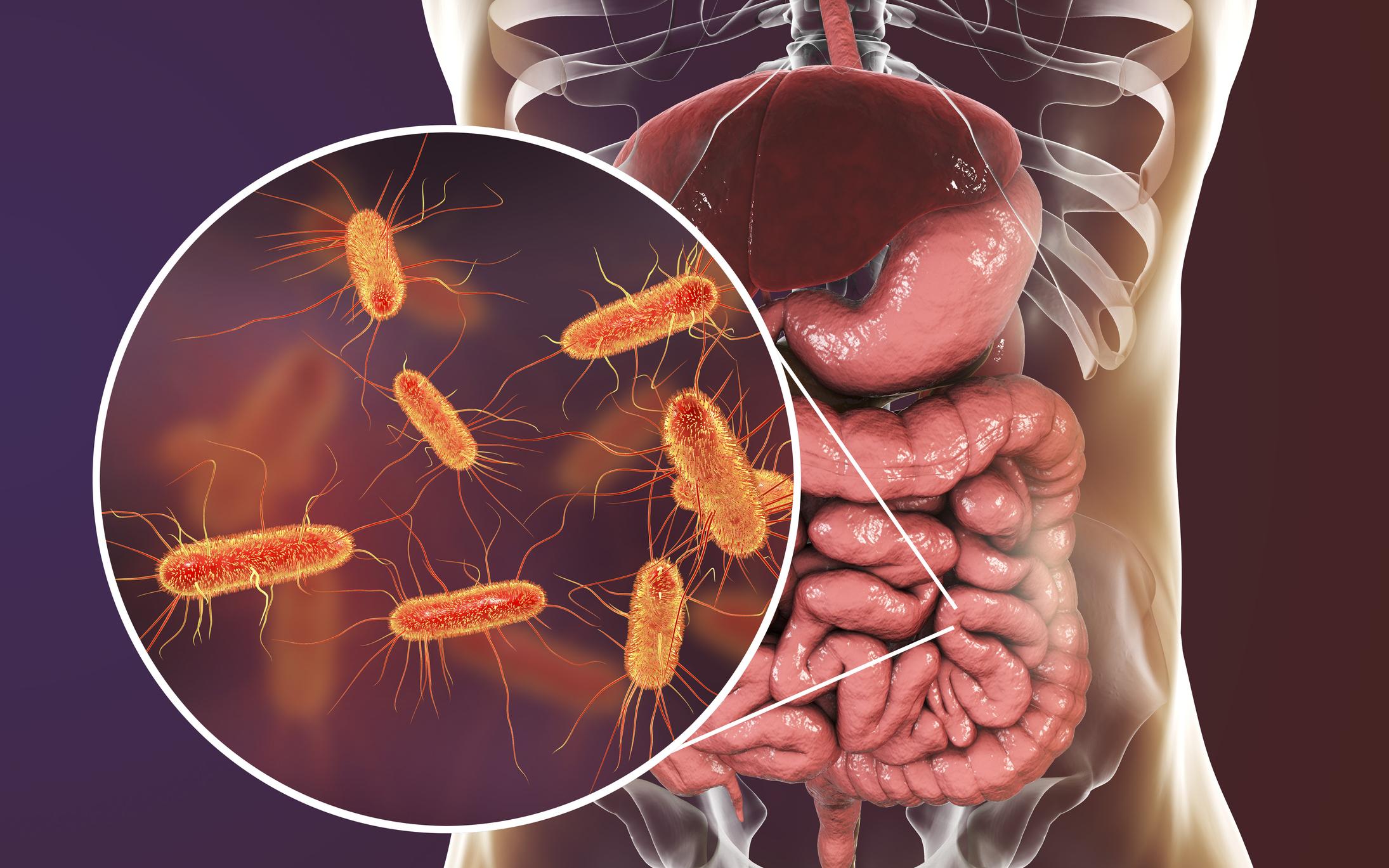 Vilka bakterier består den okända delen av tarmfloran av?