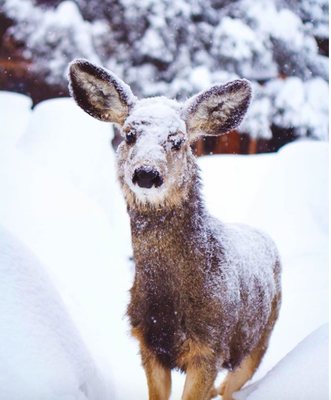 #DeersOfKimberley