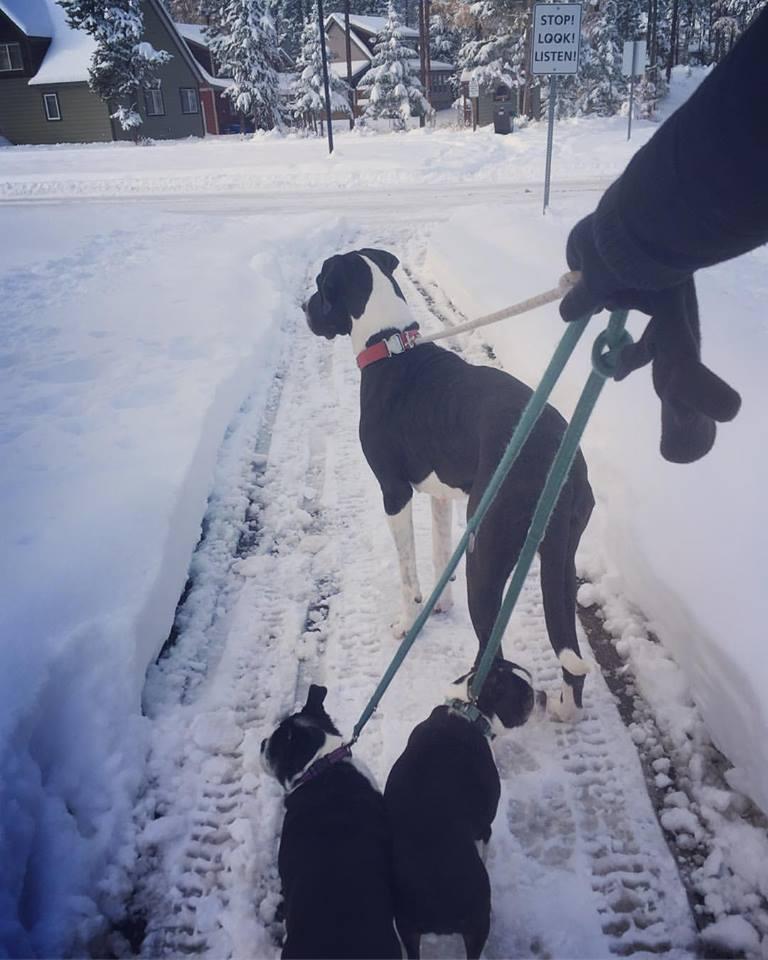 #DogsOfKimberley