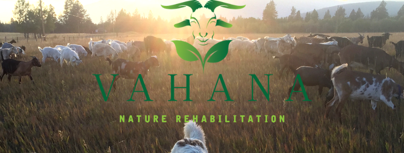 TUESDAY, May 7th - A Night with the Goats! | On Tuesday, May 7th, 7:30pm at Kimberley's Centre 64, Vahana Goats is presenting a short film about their 2018 Season and after that a very informative and entertaining movie about how goat grazing works. And there will be door prizes from Sprout and Centex!* Hosted by Vahana Goats