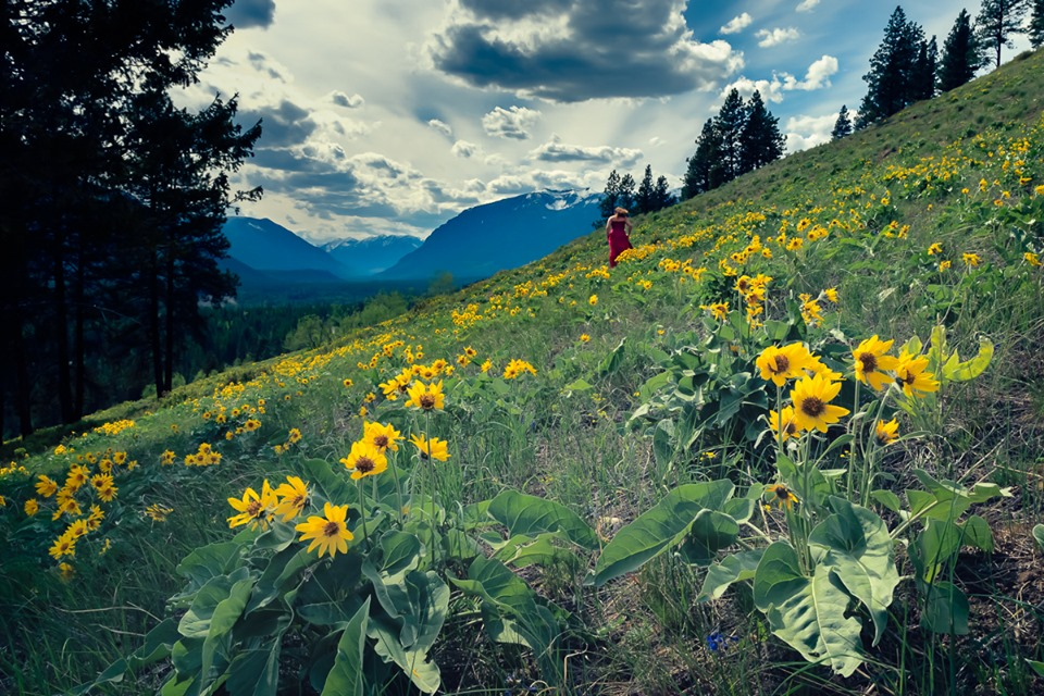 """Get out there before its to late! The sunflowers are only here for a short time longer.""  -    Aric R. Keane Photography"