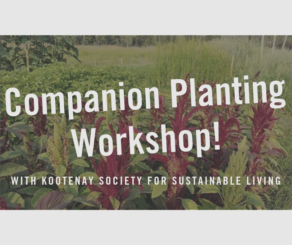 WEDNESDAY, July 3rd - Companion Planting Workshop | Join James and Sharon of the Kootenay Society for Sustainable Living to learn all about companion planting with a Grow Biointensive approach.We will be discussing the three ways to successfully companion plant in our climate with examples of each type. Discussion will be backed up with planning, planting demonstrations and explanation of the specific benefits of this technique to help solidify your knowledge.James and Sharon will also be touching on the relevant Grow Biointensive principles during the demonstration including; starting seeds in flats, hexagonal spacing, living mulch, transplanting techniques, and watering techniques – to name a few!* Hosted by Wildsight and Kimberley Community Garden, and The Kootenay Society for Sustainable Living