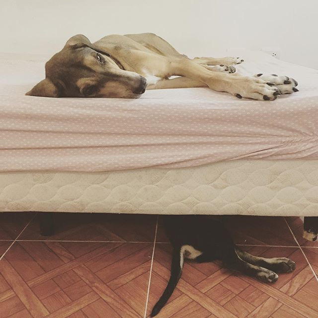 Big boy and little boy nap time!!! #rescuedog #rescuedogsofinstagram #tulum #adoptdontshop #razamestiza #mestizamalas