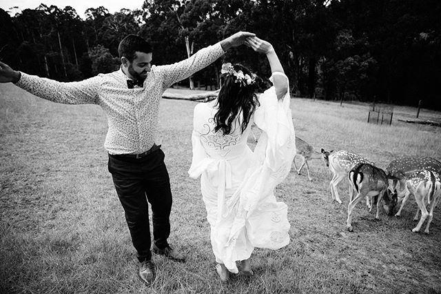 Beautifully free spirited Jess all some super loved up just married dance moves, along side some deer, as you do :) #modernbride #bridalportraits #junebugweddings #thedailywedding #fineartwedding #gumgullyfarmwedding #intimateweddings #fineartwedding #melbourneweddings #intimatewedding #weddinginspiration #greenweddingshoes #modernwedding #weddingphotography #coolbride#melbournephotographer #theknot #modernwedding #countrywedding #shesaidyes #minimalistbride #makeportraits #southmelbournewedding #gumggullyfarm #bwdivine #lookslikefilm