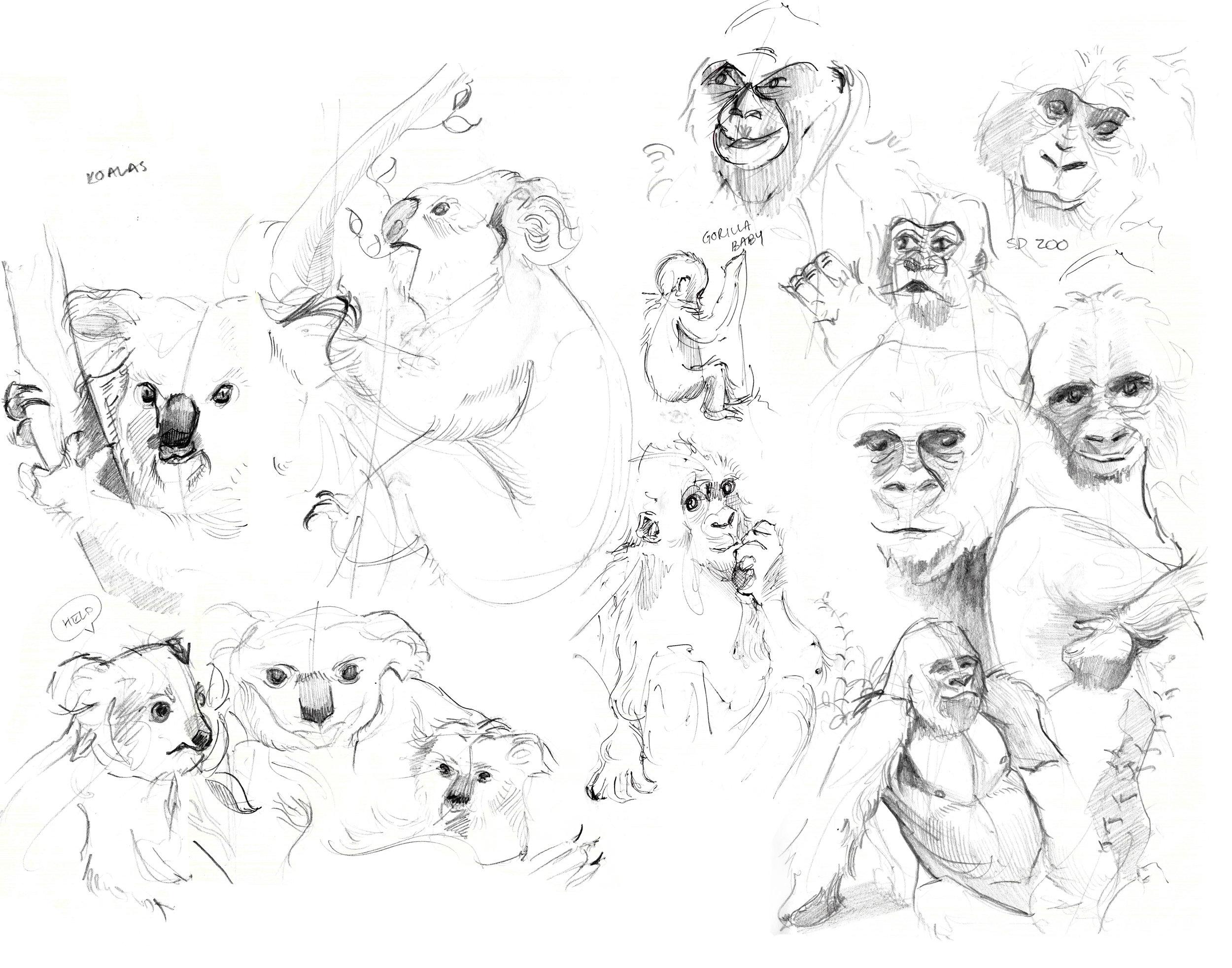 Animal Zoo Drawings