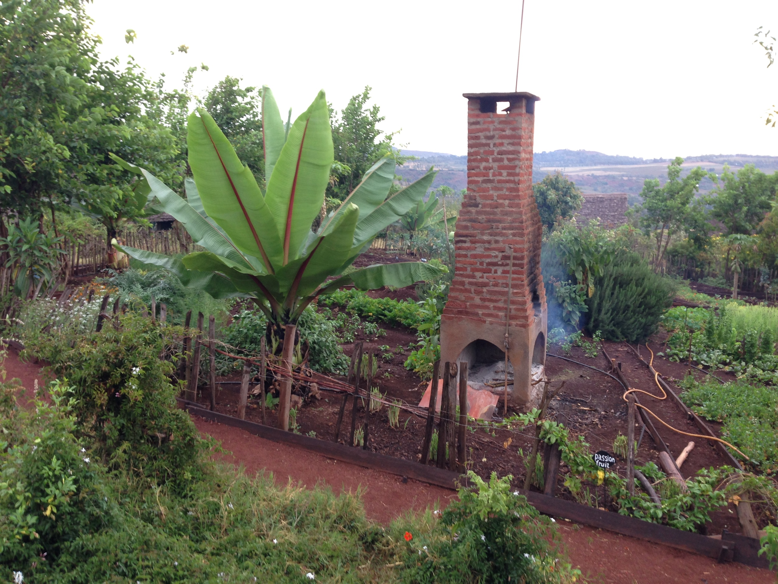 Garden at the Rhotia Valley Tented Camp... garden to table!