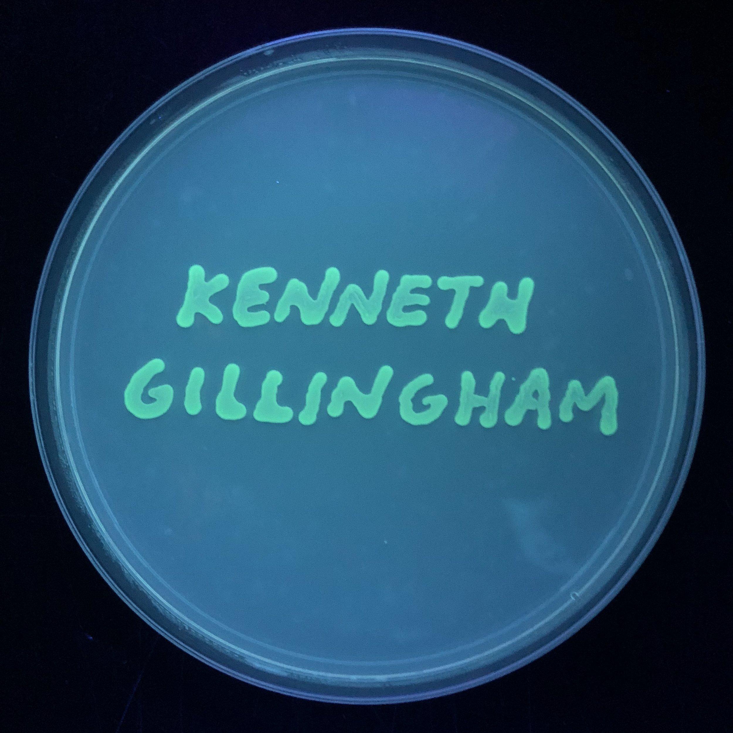 Gillingham.jpg